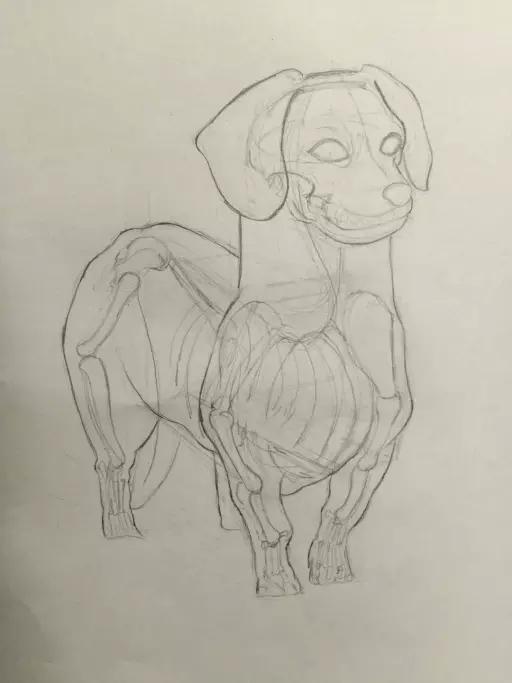 成都手绘培训  动物艺用解剖 指导老师 傅老师